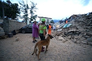 Rescuers, with the help of a dog, search for victims in damaged buildings after a strong earthquake hit Amatrice on August 24, 2016. Central Italy was struck by a powerful, 6.2-magnitude earthquake in the early hours, which has killed at least three people and devastated dozens of mountain villages. Numerous buildings had collapsed in communities close to the epicenter of the quake near the town of Norcia in the region of Umbria, witnesses told Italian media, with an increase in the death toll highly likely. / AFP PHOTO / FILIPPO MONTEFORTE